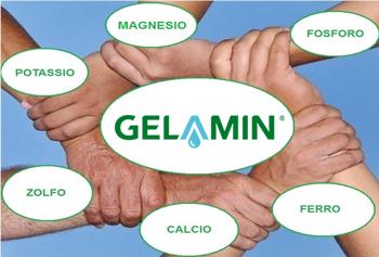 Gelamin-complessante1