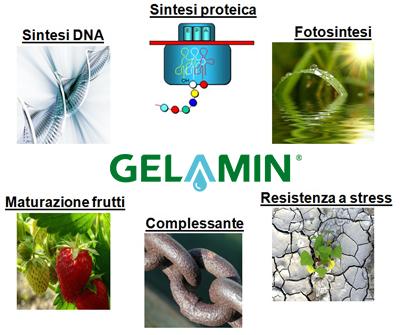 Gelamin_effetti