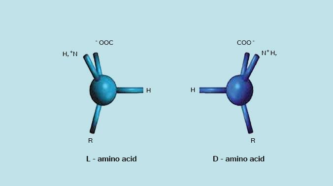 imp-amminoacidi